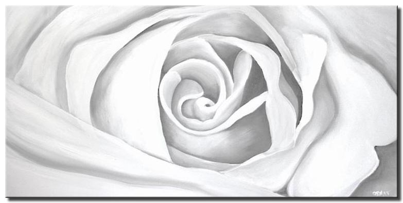 canvas print of white rose
